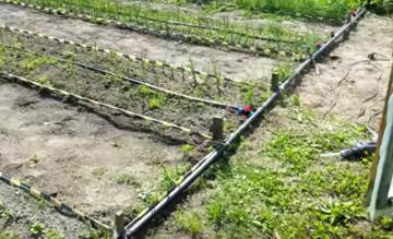Полив почвы раствором ОЭДФ
